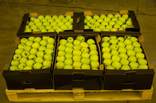 Close up of golden delicious apples in carton boxes